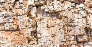 Elevazione dell'avvoltoio Immagine Stock