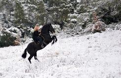 Elevazione dello stallion Fotografie Stock