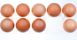 Eleven brown chicken eggs Royalty Free Stock Photos
