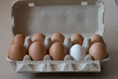 Eleven brown chicken eggs and one white egg in a gray cardboard container. Eleven brown chicken eggs and one white egg in a cardboard container Royalty Free Stock Photos