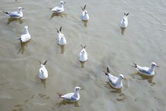 Eleven seagulls Stock Photography