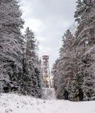 Elevi nella foresta dopo neve con i bei alberi Fotografie Stock