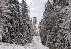 Elevi nella foresta dopo neve con i bei alberi Fotografia Stock Libera da Diritti
