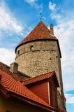 Elevi sul muro di cinta medievale a Tallinn, Estonia Immagine Stock