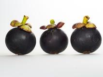 Elewacja mangostan owoc Zdjęcie Royalty Free