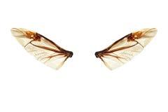 Elfów skrzydła Obrazy Royalty Free