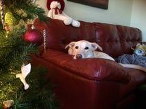 Elf de hond van de Kerstmisbank royalty-vrije stock foto's