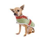 Elf dog Stock Images