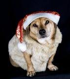 Elf dog Stock Photos