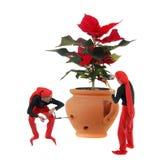 Elf en een Kerstmisbloem Royalty-vrije Stock Afbeeldingen