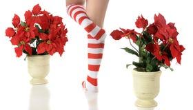 Elf Feet Between Poinsettias Royalty Free Stock Image