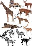Elf geplaatste kleurendieren Stock Foto's
