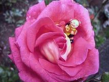 Elf nella rosa Immagine Stock Libera da Diritti