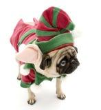 Elf Pug Royalty Free Stock Photo