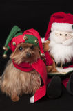 Elf yorkshire terrier dog Stock Images