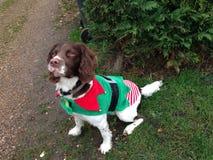 Elfe de chien de Noël Photos libres de droits