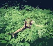 Elfmeisje in groen struikgewas Stock Fotografie