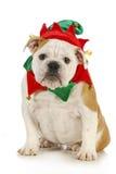 Elfo di natale del cane Fotografia Stock