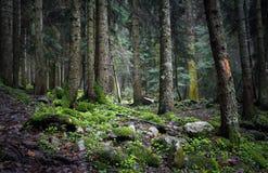Elfy lasowi Obraz Stock