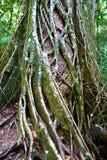 Eli Nebenfluss, Faser Insel, Australien Stockfotos