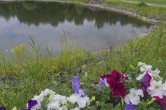Elicate blüht gegen den Hintergrund von einem kleinen Teich 2 Stockfoto