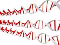 Eliche del DNA Fotografia Stock