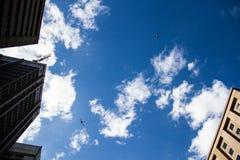 Elicotteri nel cielo blu della metropoli Fotografia Stock Libera da Diritti
