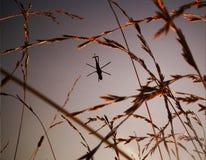Elicottero che sorvola il giacimento di grano Fotografia Stock