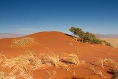 Elim Dune at Sossusvlei Royalty Free Stock Photos