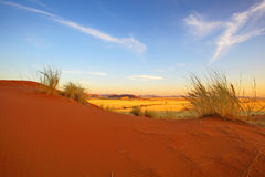 Elim Dunes Golden Hour Royalty Free Stock Photo