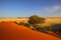 Elim dunes Stock Photo