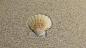 Eliminación de la concha marina que miente en la arena almacen de metraje de vídeo