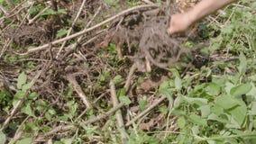 Eliminación de raíces de la planta almacen de video