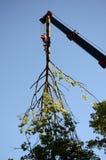 Eliminación del árbol roto Foto de archivo libre de regalías