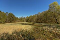 Eliminando con la palude in una foresta norvegese della molla fotografia stock