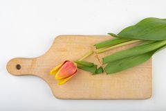 Elimine a cabe?a de uma tulipa em uma placa de corte da cozinha Flor de corte na cozinha imagens de stock royalty free