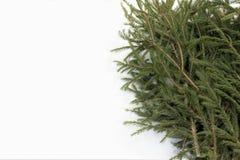 Elimine os ramos verdes do abeto vermelho na neve branca como a preparação de um fundo do Natal imagem de stock