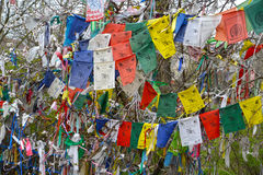 ELISTA, RUSSIA. Hiymorin, color Buddhist checkboxes with a prayer are hung out on a tree. ELISTA, RUSSIA - APRIL 19, 2017: Hiymorin, color Buddhist checkboxes Stock Photography