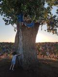 Lone Poplar Tree. Elista Russia. Tree planted by Buddhist monk stock image