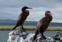 Elizabeth Bay, Galápagos. Elizabeth Bay in 5he Galápagos Islands Royalty Free Stock Photo