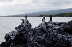 Elizabeth Bay, Galápagos. Elizabeth Bay in 5he Galápagos Islands Royalty Free Stock Photography