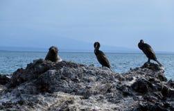 Elizabeth Bay, Galápagos. Elizabeth Bay in 5he Galápagos Islands Stock Images