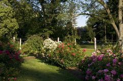 Elizabeth Park - bella Rose Garden Fotografia Stock Libera da Diritti