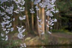 Elizabeth park Dziesięć - Biali kwiaty obraz stock