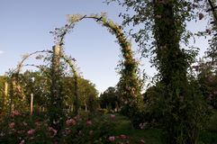 Elizabeth Park Three - Rose Arches Image libre de droits