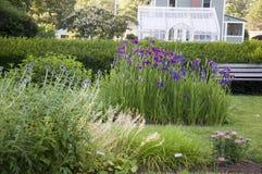 Elizabeth Park Two - purpurrote Iris Lizenzfreies Stockfoto