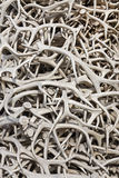 Elk Antler Arches Royalty Free Stock Images