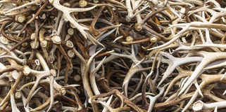 Elk antler's. A large pile of elk antlers on display and for sale Royalty Free Stock Photo