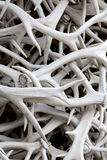 Elk Antlers (background) Stock Photography