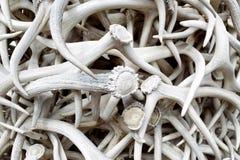 Elk Antlers Stock Images